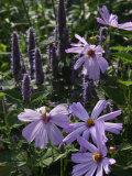 Flower Garden, Stockbridge, Berkshires, Massachusetts, USA Fotoprint van Lisa S. Engelbrecht
