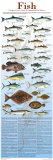 A Seafood Lover's Guide to Sustainable Fish Choices Affiches par Brenda Gillespie
