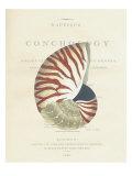 Conchology Nautilus Giclée-Premiumdruck von  Porter Design