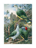 Painting Depicts Three Fruit Pigeons Perched on Tree Branches Photographic Print by Hashime Murayama