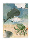 Sheep Crab Treads the Ocean Floor Beneath a Group of Electric Rays Photographic Print by Hashime Murayama