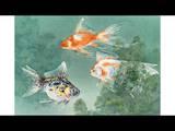 Three Different Types of Goldfish Swim Through Cabomba Photographic Print by Hashime Murayama