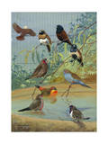 Various Birds Rest in a Birdbath and on Branches That Hang Above Photographic Print by Allan Brooks