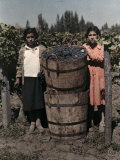 Two Women Stand with Barrels of Grapes Used to Make Wine Photographic Print by Maynard Owen Williams
