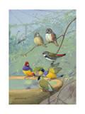 Finches Perch on the Edge of a Birdbath Photographic Print by Allan Brooks