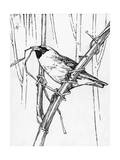 Sketch of a Weaverbird Shows the Bird's Skill with Grass and Twigs Photographic Print by Hashime Murayama