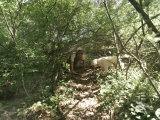Man Hunts for Truffles with His Truffle Dog Fotografisk trykk av  xPacifica