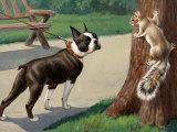 Boston Terrier Eyes a Nervous Squirrel Lámina fotográfica por Walter Weber