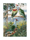 Painting of Three Fruit Pigeons Perched on Branches Photographic Print by Hashime Murayama