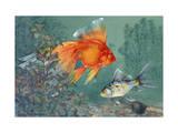 Veiltail and Shubunkin Swim Together Through Ludwigia Photographic Print by Hashime Murayama