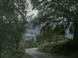 Dirt Road Winds Past Trees Photographic Print by Maynard Owen Williams