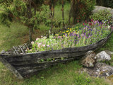 Old Wooden Boat Used as a Flower Planter Photographic Print by  Keenpress
