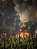 Aerial View of Forest Fires in the Boise National Forest Fotografisk tryk af Mark Thiessen