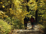 Two Men Walking a Gravel Road Through a Forest Valokuvavedos tekijänä Raymond Gehman