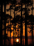 Slash Pine Forest Silhouetted at Sunset Photographic Print by Raul Touzon