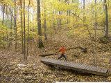 Woman Trail Running Through Fall Foliage Reproduction photographique par Skip Brown