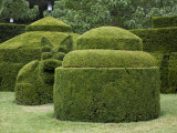 Topiary Garden at Longwood Gardens Reproduction photographique par Scott Warren