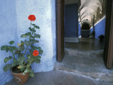 Potted Geranium at the Sprawling Santa Catalina Monastery Reproduction photographique par Scott Warren