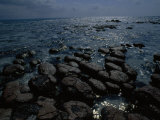 Survivors of the First Living Communities, Stromatolite Reefs Still Flourish in Shark Bay Photographic Print by O. Louis Mazzatenta
