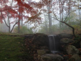 Japanese Maple Garden and Waterfall in Morning Fog Photographic Print by Darlyne A. Murawski