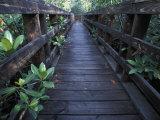 Walkway at a Nature Refuge on Vieques Island, Puerto Rico Reproduction photographique par Scott Warren