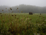 Morning Fog over a Field with Hay Bales Photographic Print by Rebecca Hale