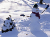 Dressed Up Snowman Next to a Snow Covered Colorado Blue Spruce Fotografisk trykk av Paul Damien