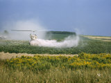 Crop-Dusting Helicopter Hovers Low over a Potato Field Photographic Print by Howell Walker