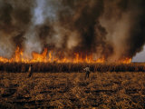 Field Hands Watch Fire Burn Through Sugar Cane Field Ready to Harvest Reproduction photographique par Andrew Brown