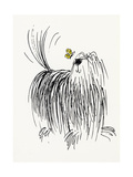 Shaggy Dog with Butterfly Poster