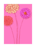 Zinnias on Pink Background