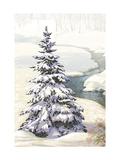 Single Pine Tree in Snow Láminas
