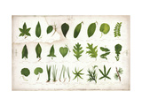 Vintage Botanical Study Posters