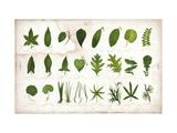 Vintage Botanical Study Pôsters