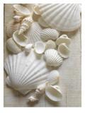 White Sea Shells Fotografia