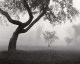 Dans la brume Posters par Monte Nagler