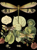 Whimsical Dragonfly on Black II Plakater