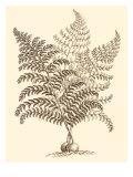 Sepia Munting Foliage VI Prints by Abraham Munting