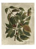 Deshayes Tree II Poster von Gerard Paul Deshayes