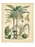 Fruitful Palm II Poster