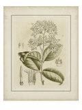 Tinted Botanical III Affiches par Samuel Curtis