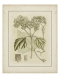 Tinted Botanical IV Posters par Samuel Curtis
