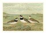 Shore Gathering IV Print by Franz Eugen Kohler