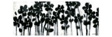 Black Flowers on White II Posters par Norman Wyatt Jr.