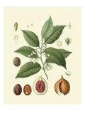Botanical Glory III Giclée-Premiumdruck von  Vision Studio