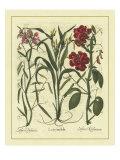Besler Floral III ポスター : Besler Basilius