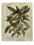 Deshayes Tree III Kunstdrucke von Gerard Paul Deshayes
