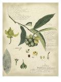 Pflanzenstudien II Kunstdrucke von A. Descube