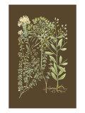 Organic Greenery III Kunstdrucke von Johann Wilhelm Weinmann