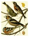 Domestic Bird Family II Art by W. Rutledge